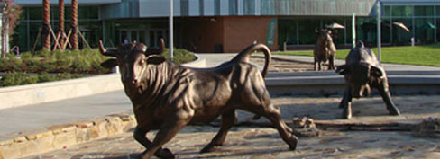 Statues of USF Bulls in front of the Marshall Center.